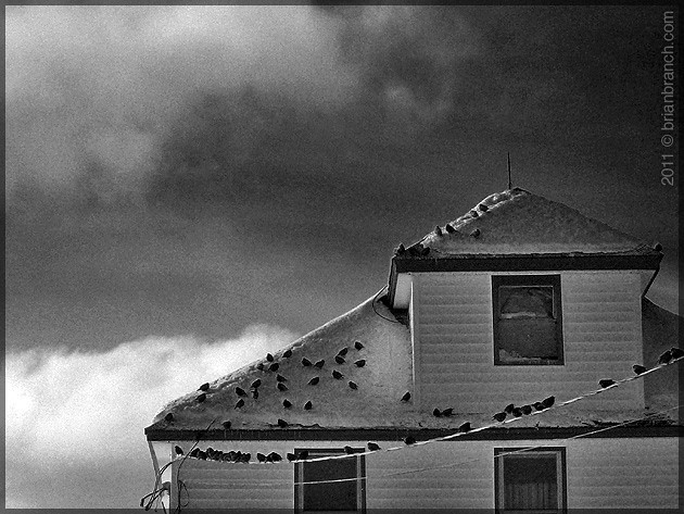 P1130652_birds_on_house