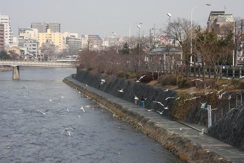 冬の鴨川 / Kamogawa,Kyoto
