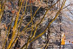 IMG_1053.jpg (elektratig) Tags: winter newjersey stillwater sussexcounty