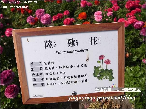 台中后里_中社光觀花市20110130_R0017619
