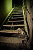 Zone contaminée (Ysalis.net) Tags: urban chien abandoned abandon urbanexploration 5d 24mm exploration escalier usine abandonned urbex urbaine abandonné renard industrielle squelette friche strobist urbanurbex
