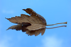 Resting (Mrs S.A) Tags: game reflection leaf pre winner gamewinner nikond40 gamex2winner gamex3winner pregamewinner gamex3gamex2vsgamex2winners gamex2gamevsgamewinners
