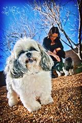 Suzie Q (Miss Minie  :Process Of Illumination:) Tags: winter dog newmexico cute canon puppy danielle adorable albuquerque wideangle tokina 1224mm