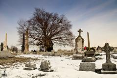 Kremer (rosserx) Tags: winter snow tree graveyard headstone pentaxkx laurelhillcemetery