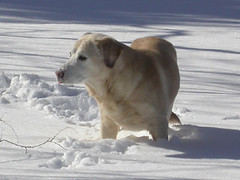 Looking Around (Laura Rainbow Dragon) Tags: wonderdog snowplay snowprincess princesskendal