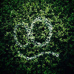 Smile (*Jilltoo) Tags: newzealand white plant strange smile face leaves square graffiti eyes funny paint painted humor hedge nz alive vignette defaced plantgraffiti