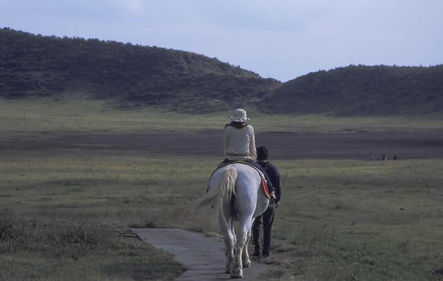 草原と馬のフリー写真素材