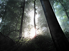 SteppingThroughTheLookingGlassToABetterPlace (BphotoR) Tags: light forest germany deutschland hessen n silhouettes powershot explore letter rays odenwald potofgold naturesfinest buchstabe bergstrasse supershot betterplace g10 abigfave juhhe anawesomeshot bphotor