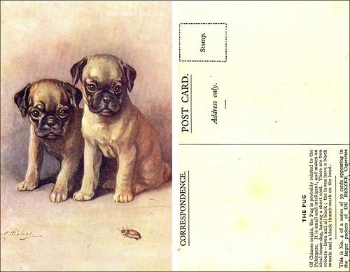 Pug - Cigarette Card