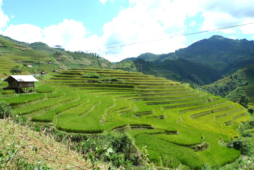 Stunning terraced fields in Mu Cang Chai, Vietnam