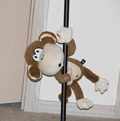 Pole Dancing (IM2_OCD) Tags: canon toy monkey doll littlerock pole arkansas poledancing bobbyjack 60d