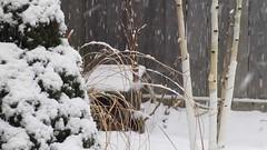 Snow in Garden video