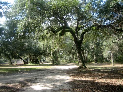 feb-trees-1