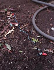 F4 Ear Plugs (Andy Reaser) Tags: 50mm losangeles nikon fuji 14 400 f4 ai forestlawn xtra