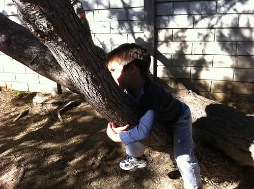 Finn hangs out in a tree