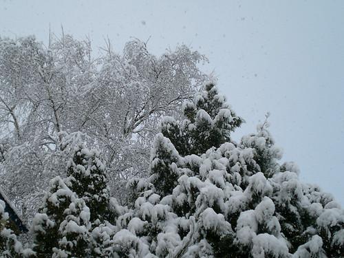 SnowKitties01