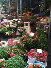 Flower Market by Lynn Burton (Visit Holland) Tags: flowers spring tulips tulip justbe readyforspring visitholland
