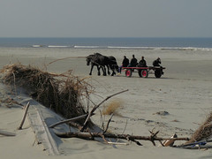 Longing for the first warm days (Seapony) Tags: sea horses men beach terschelling dunes northsea horseandbuggy beachcombers seapony waddenisland