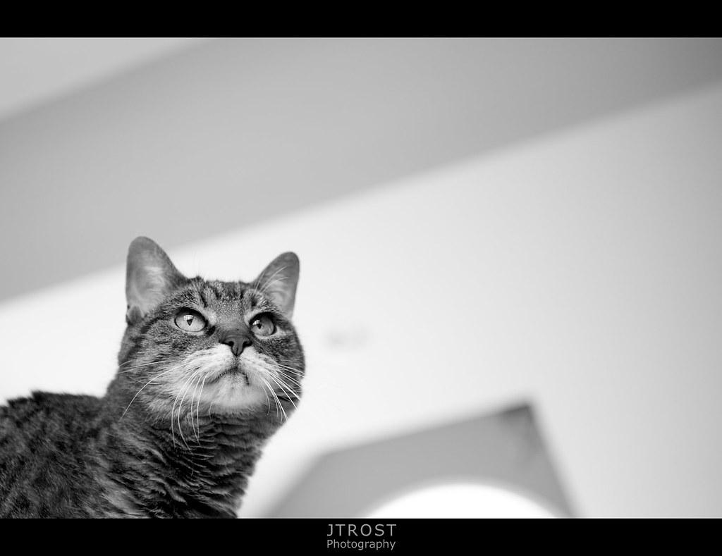 Reggie - The Best Cat
