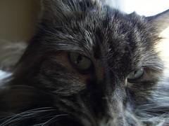 Pinka Luna (Marcus Metropolis) Tags: leica friends cats digital fun with minneapolis things around mn bumming leicadlux4