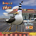 CrowAboutB_Happy-bird_bldesign
