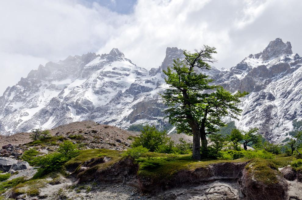 Un parche verde de las 79.000 hectáreas ocupadas por los bosques del parque nacional los glaciares en los que predominan la lenga y el guindo.(Roberto Dam - Patagonia, Argentina)