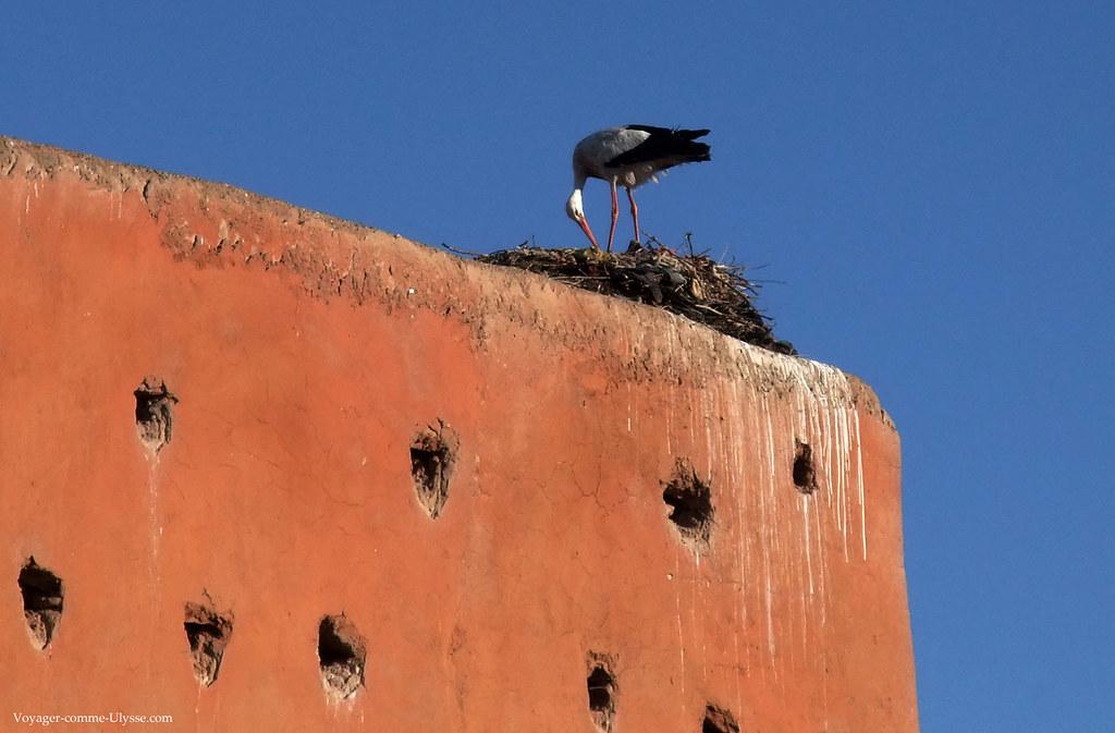 Les cigognes élisent volontiers domicile sur les hauteurs des remparts