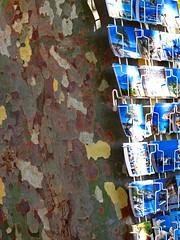 Nonza, Haute-Corse, Corse, France, 2010 (Photox0906) Tags: summer france green island stem corse military corsica camouflage postcards trunk t militaire mediterraneansea capcorse tronc planetree le mditerrane platane cartespostales nonza mditerranen vertdegris prsentoir hautecorse