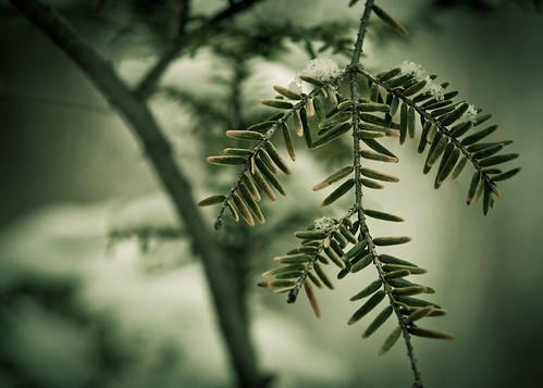 Evergreen 2