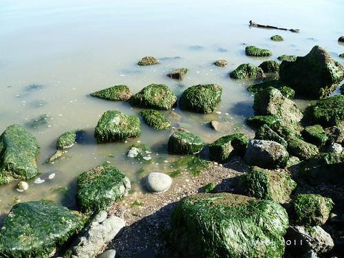 coastal cleanup 081