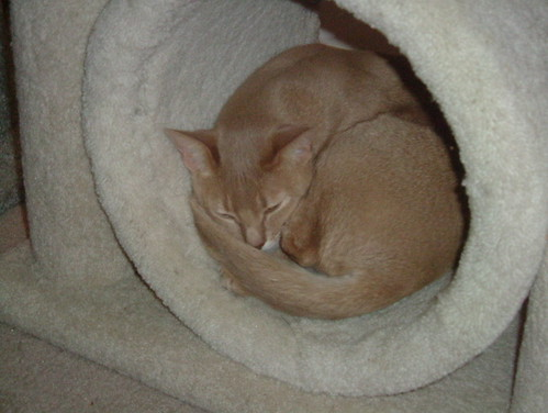 Pharaoh Sleeping