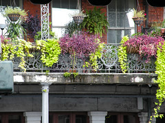 Decatur Street Balcony & Plants (dsjeffries) Tags: plants fern basket neworleans wroughtiron frenchquarter nola ferns hangingplants neworleanslouisiana wroughtironbalcony hangingferns quartierfrancais