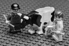 12/52 : La crise de la vache folle - Mad cow crisis