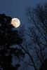 樹間の満月