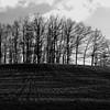 Haie (frederic.conte) Tags: light blackandwhite tree blackwhite noiretblanc lumière hedge paysage arbre noirblanc haie