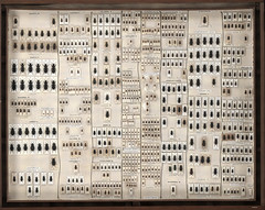 Drawer 03 (NHM Beetles and Bugs) Tags: uk fauna collection british beetles entomology coleoptera aaallen