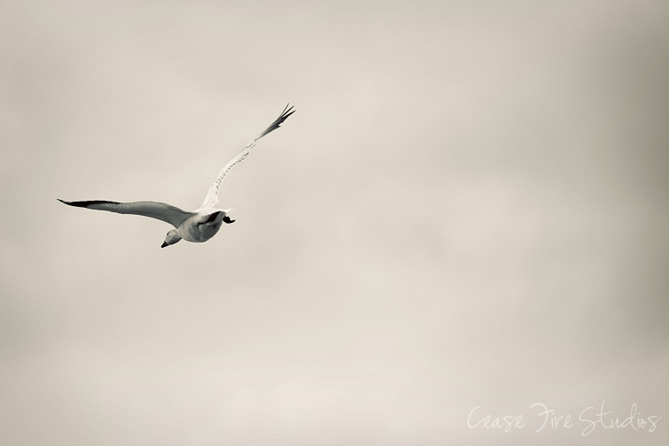 03-24-fly