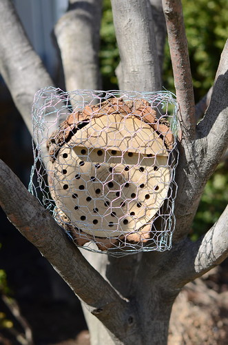 Make a mason bee nest