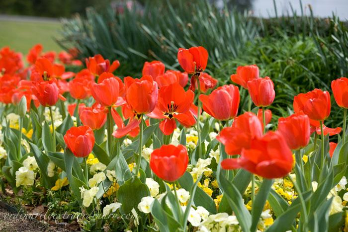Spring_032611_0007web