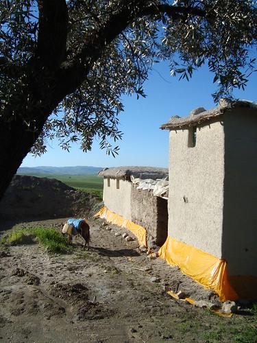 La maison en terre et l'âne de Bachir