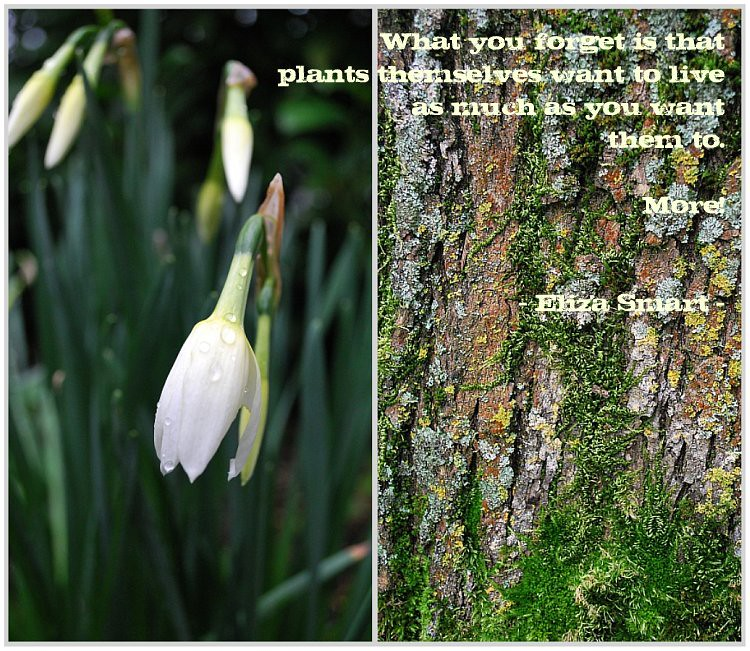 Picnik collage-2 :)