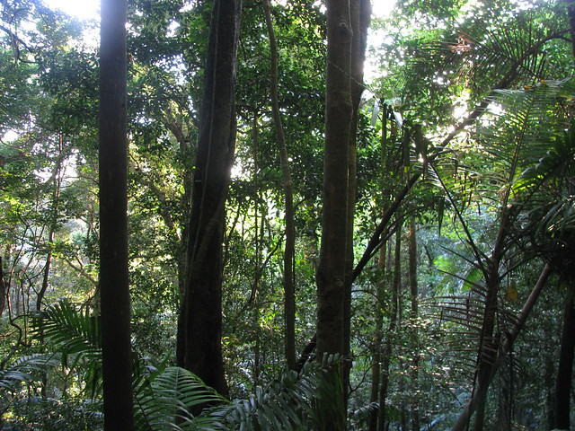 Rainforest, Joyners Ridge Road