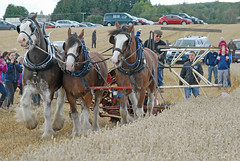 Harvest -  Working Horses Day 2016 (john_mullin) Tags: scotland scottish british horse hoses workinghorses heavyhorses clydesdale farm farming agriculture indaysgoneby horsepower teamwork animals cultivation harvest ploughing britishhorsesociety collessie fife
