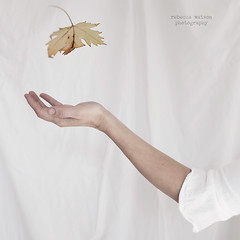 (Rebecca Watson Photography) Tags: autumn fineartphotography pale milky textured selfportrait square texturesquared