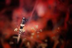 """Pschhh,pschhhh...That is the secret way.."" (Ilargia64 (back again!)) Tags: dreamland magic bug prayingmantis insect pink light forest nature closeup macro secret path"