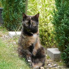 Chiffonnette (Lau (Fripy) absente mercredi ;-)) Tags: bestofcats catmoments vg~catsgallery coth
