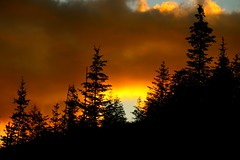 Sunset (CLloyd Photos) Tags: sunset sky creation clouds trees orange