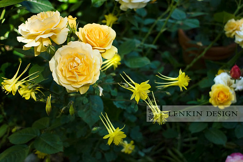 Lenkin-05.12.10-017