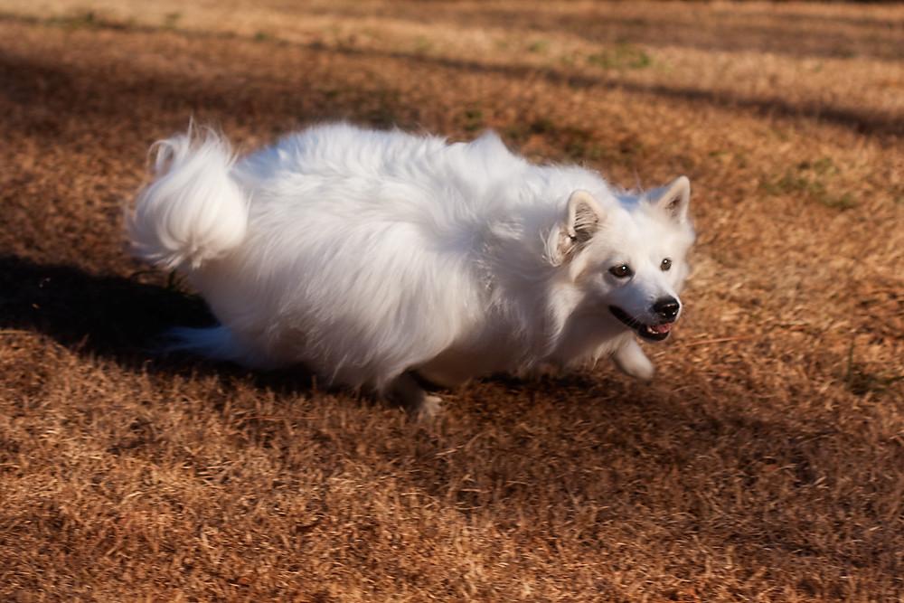 Macro 23/31:  Running Trixie