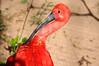 Bird park Foz do Iguacu